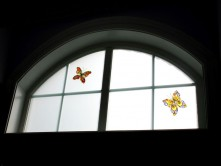 window(butterfly)